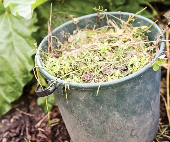 Bucket full of weeds. re?id=3827