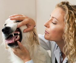 Make Sense of Doggy Dental Care
