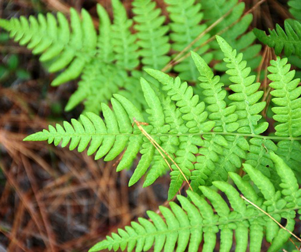 vibrant green fern re?id=3750