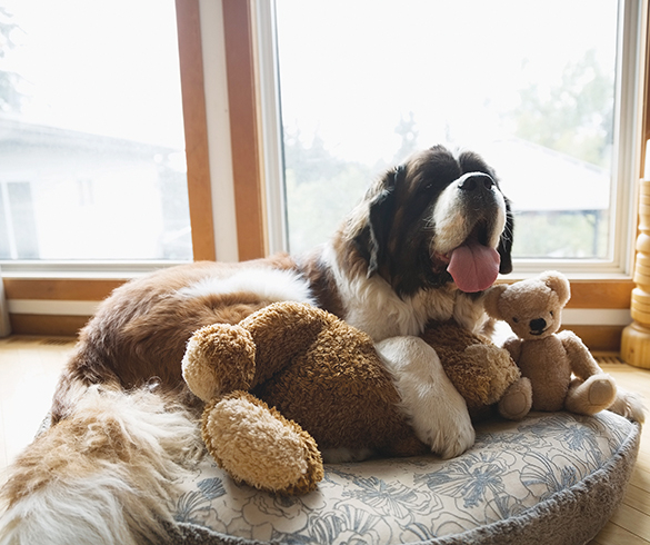6 Ways to Help Your Dog Maintain Calm Behavior - 14756