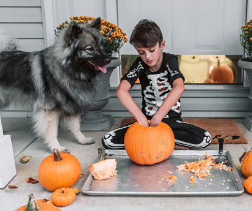 4 Tips to Celebrate Halloween with Your Pet