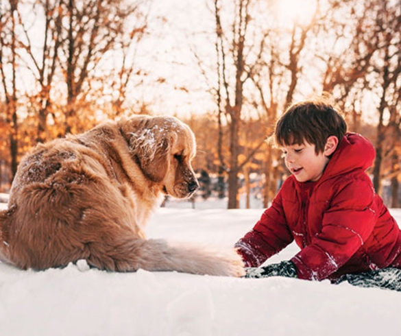 Help Pets Ward Off Winter Risks - 14593