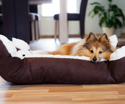 4 Ways to Refresh Your Pet's Routines