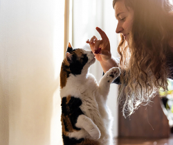 4 Ways to Connect with Your Cat