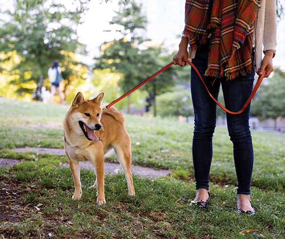 Pet Health Tips for an On-the-Go Lifestyle - 14873