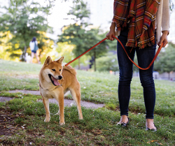 Pet Health Tips for an On-the-Go Lifestyle