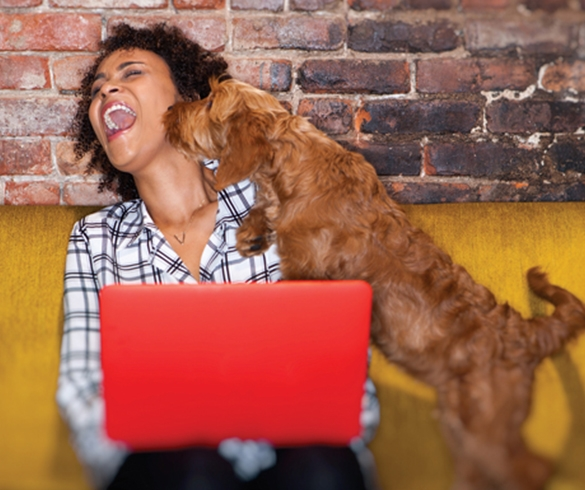 5 Tips for Bringing Your Pet to Work this Summer - 14408