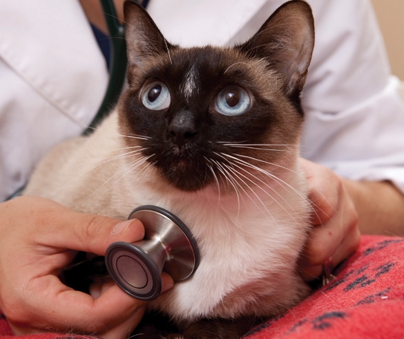 Keep Up with Your Cat's Health - 14435