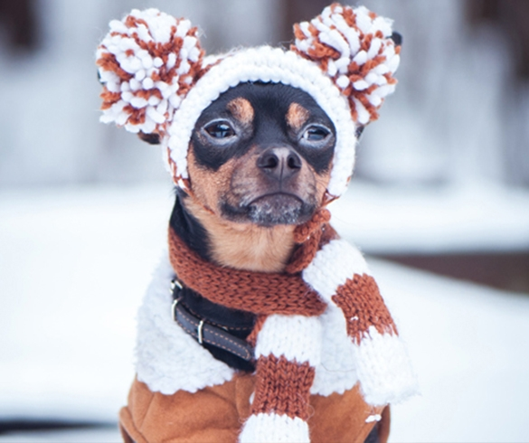 4 Tips to Prepare Your Pup for Winter - 14482