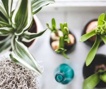 Gardening With Charlie - Houseplants Clean the Air