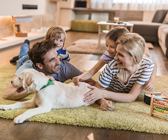 5 Tips for Bringing a New Pet Home - 15188