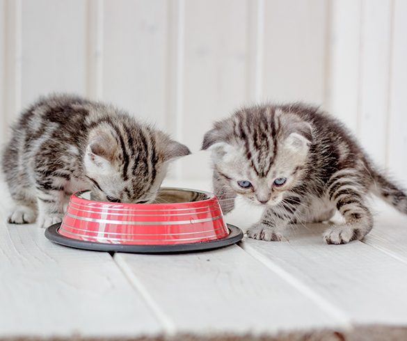 5 Ways to Keep Your Cat Happy and Healthy - 14874