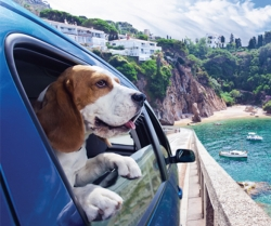 5 Tips to Take Pets on Trips