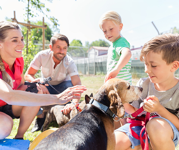 3 Ways Pet Adoption Can Be a Win for All - 14863