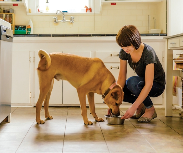 3 Tips for Pet Parents and Their Pooches to Eat Clean - 13788