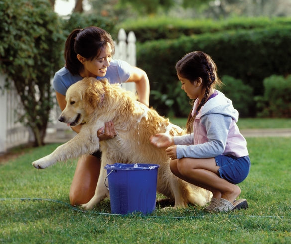 Protect Your Pets from Summer Pests - 13751
