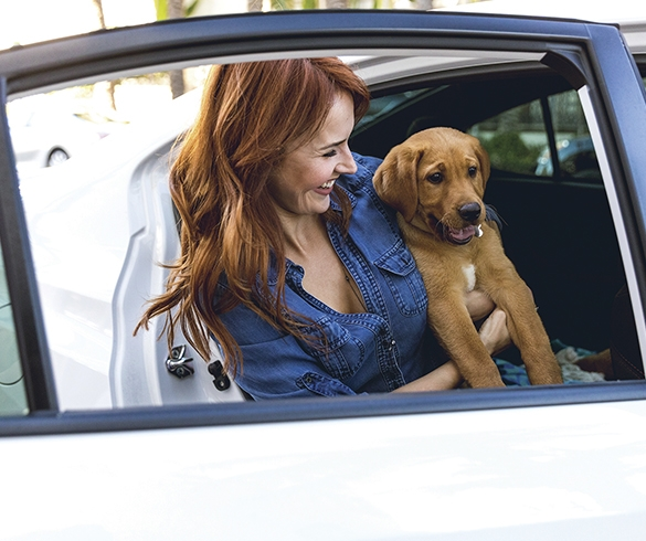 Tips for Safe Summer Travel with Pets-14228