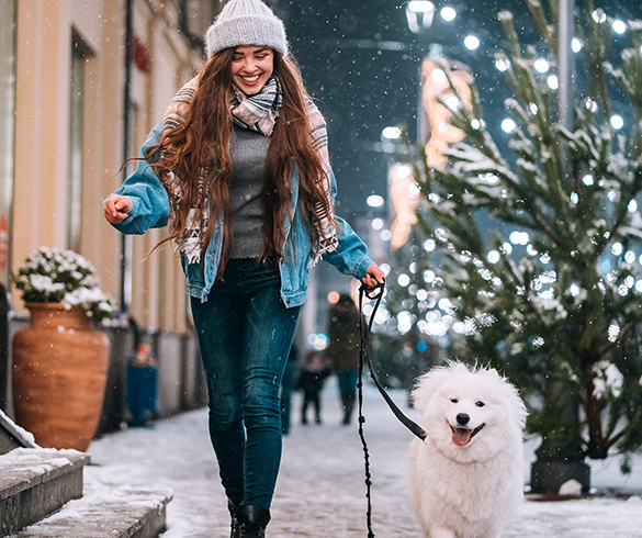 4 Ways to Include Your Furry Friends in Holiday Festivities  - 15527