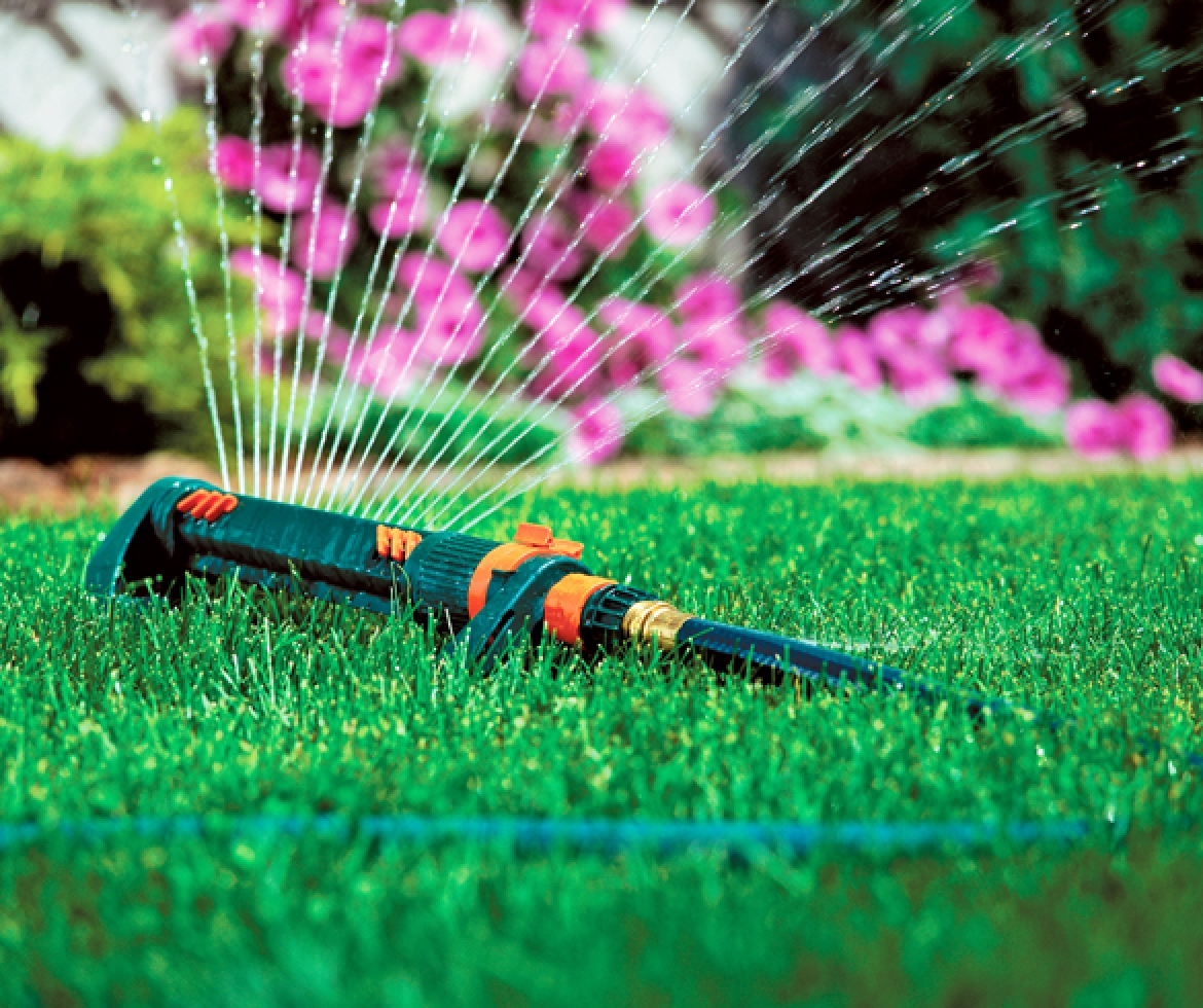 Sprinkler attached to hose watering green grass.
