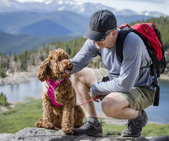 4 Tips for Peak Pet Fitness - 14771