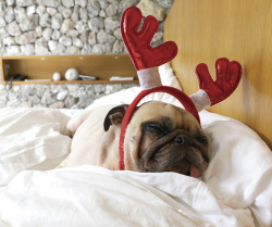 Create a Pet-Friendly Home This Holiday Season