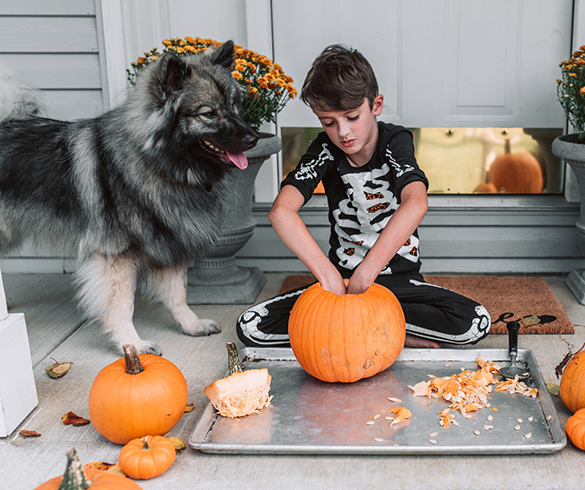 4 Tips to Celebrate Halloween with Your Pet - 15493