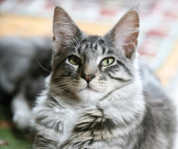 Purrrsonality Plus: Understanding Your Cat's Behavior