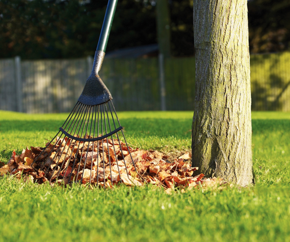 Leaves being raked into a pile. re?id=4119 redirect for Fall Garden Checklist re?id=2339