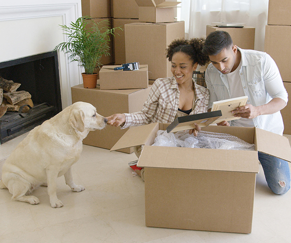 5 Tips for Moving with a Pet - 14772