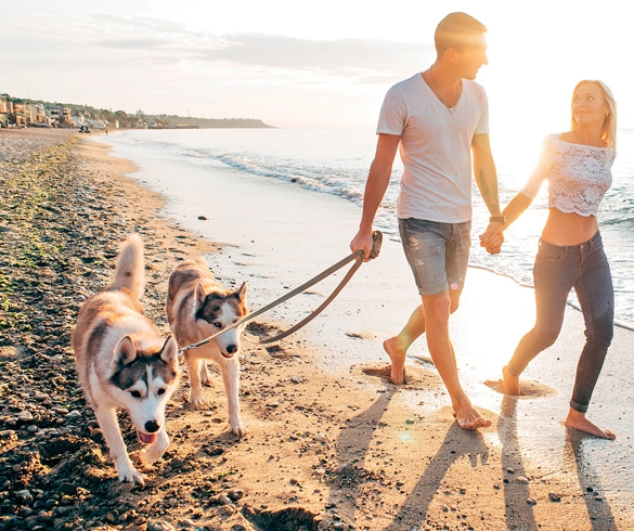 Tips for Summer Travel with Your Pet - 13801
