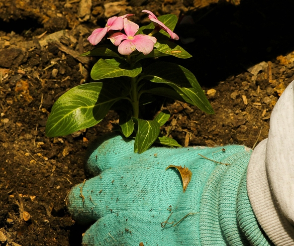 Planting a flower in soil re?id=2309