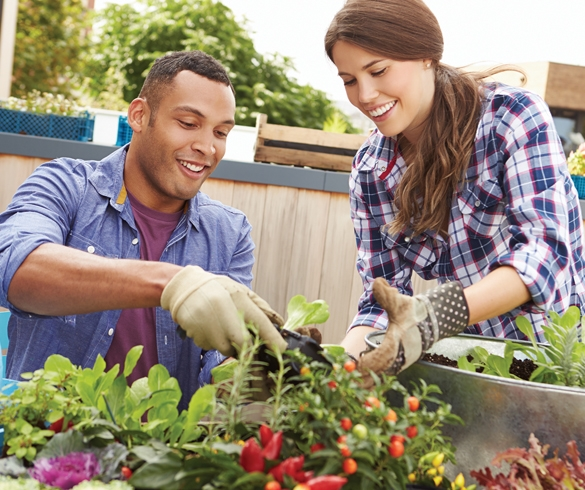 10 Tips for Urban Gardening - 13835