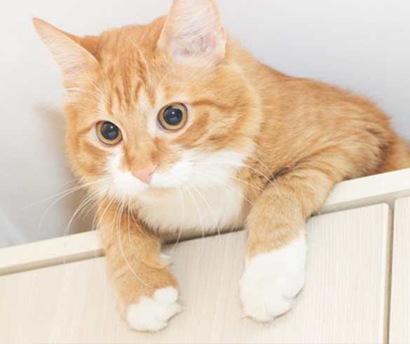 4 Feline Summer Health and Safety Tips - 14378