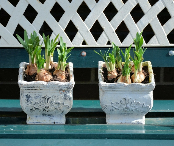 Growning plant or flower bulbs in planters. re?id=2284  re?id=2985 redirecting Bulb planting strategies re?id=3064