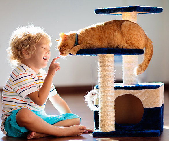 4 Ways to Help Your New Cat Adapt to Your Home - 15426