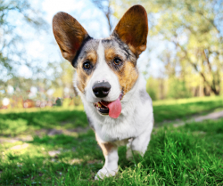 4 Qualities of a Pet-Friendly City