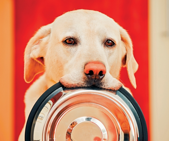 5 Benefits of Personalized Dog Food - 13870
