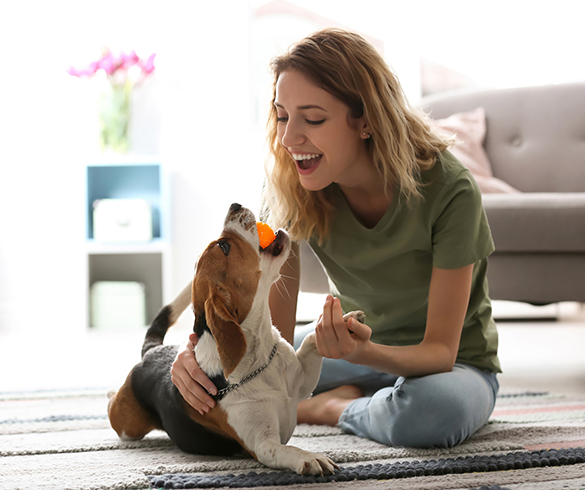 5 Ways to Prepare for a New Furry Companion - 14795